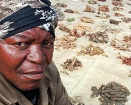 Heel wat medicinale planten worden in Zuid-Afrika op de markt te koop aangeboden