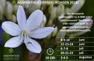 Agapanthus opendeurdagen 2018